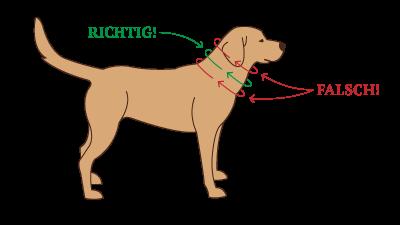 Messen Sie den Halsumfang Ihres Hundes richtig, damit das Halsband perfekt passt